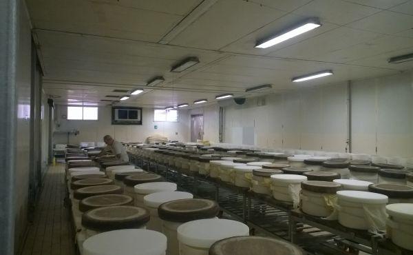 sala formatura da risanare