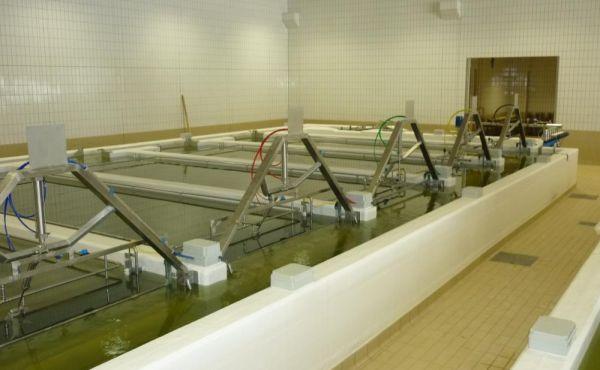 Impianto salatura dinamica